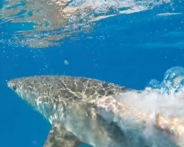 Diver Thwarts A Shark Attack With A Massive Slap 5