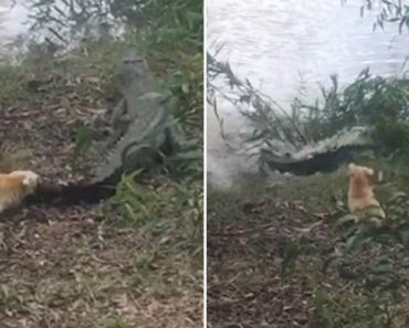 Dog Faces Off Against Giant Crocodile, Somehow Wins 2