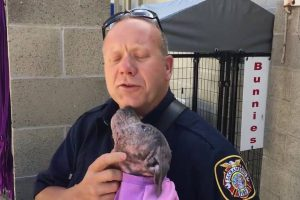 Puppy Is Sad At Shelter, Until She Reunites With The Firefighter Who Saved Her From Abuse 12
