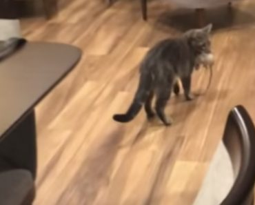 Woman Freaks Out When She Noticed Her Cat Caught A Rat In The House 3