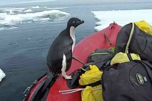 Penguin Jumps On Board Research Boat To Say Hello 10