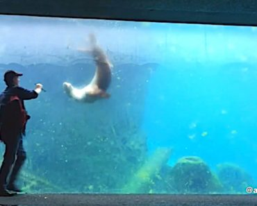 Man Plays Virtual Fetch With A Clever Sea Lion From Behind The Glass Wall Of The National Zoo Aquarium 6
