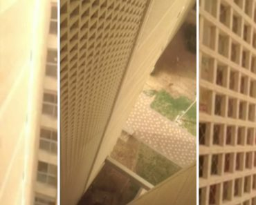Students Rescue Cat from 7th Floor Fall at Hebrew University Dorms 2