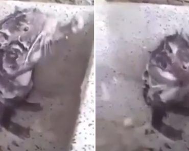 People Are Mesmerised By This Rat That Showers Like a Person 8