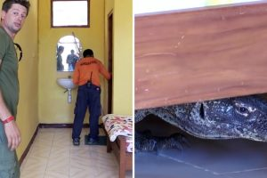 Cameraman Finds Huge Komodo Dragon Knocking About In His Hotel Room 10