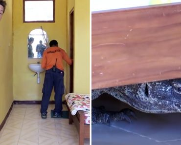 Cameraman Finds Huge Komodo Dragon Knocking About In His Hotel Room 2