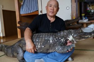 Japanese Man And His Giant Pet Caiman Have Been Living Together For 34 Years 12
