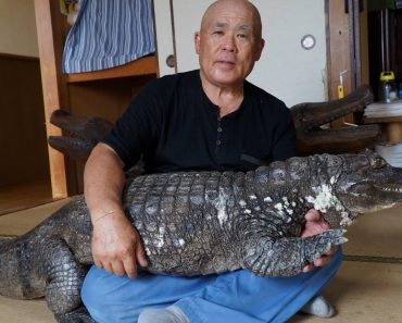 Japanese Man And His Giant Pet Caiman Have Been Living Together For 34 Years 5