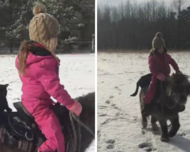 Adorable Cat Enjoys Horseback Riding With Owner On Her Miniature Pony 8