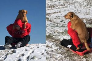 Dog Adorably Climbs On Human's Back When He Wants To Go Sledding 10