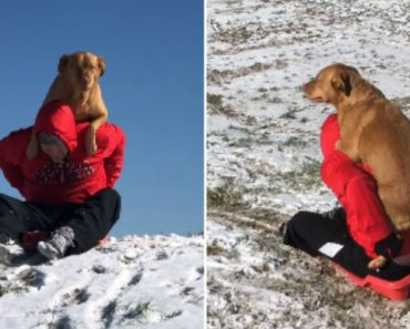Dog Adorably Climbs On Human's Back When He Wants To Go Sledding 2