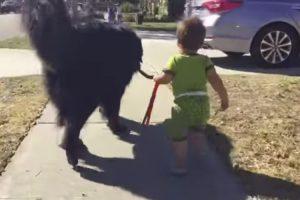 Cute Baby Walks Giant Dog 10