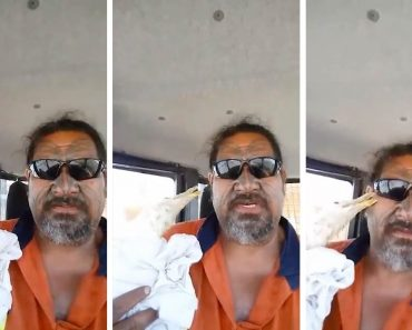 Man Hilariously Assaulted By Seagull He Rescues 1