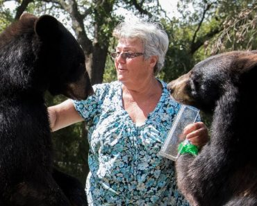 This Granny Lives With Two Grizly Bears And A White Tiger 2