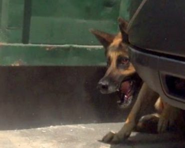 Security Guards Rush To Help Rescue A Scaredy Homeless German Shepherd 4