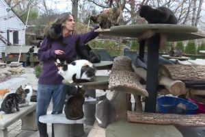 Man Turns His Long Island Home Into Shelter For 300 Cats 9
