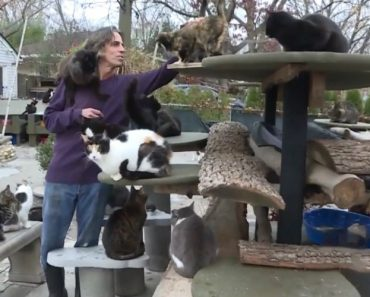 Man Turns His Long Island Home Into Shelter For 300 Cats 3