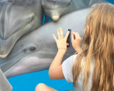 Amazing Moment Little Girl Calls Dolphins Towards Her By Playing A Comb 7