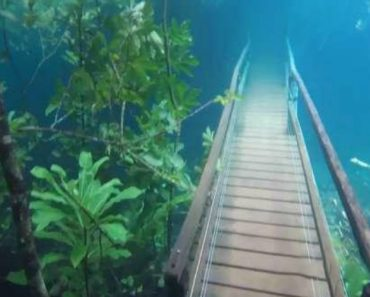 Mesmerizing Footage of a Brazilian Hiking Trail Submerged Under Crystal Clear Water By Heavy Rain 2