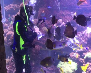 This Guy Built A 20,000 Gallon Private Reef Tank 7