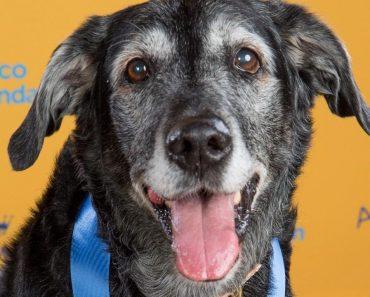 Elderly Pup Left at Kill Shelter Wins Gold at Dog Show 5
