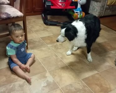 Kind One-Year Old Boy Sharing Biscuit With Family Dog 2