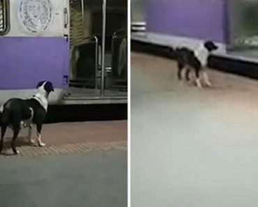 This Dog Mysteriously Waits For The Same Train Night After Night 2