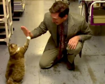 Animal Shelter's Hilarious Cat Commercial Is A Low-Budget Masterpiece 7