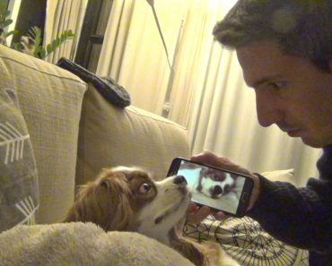 When He Had Enough Of His Dog's Loud Snoring, He Came Up With A Hilarious Solution 3
