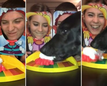 You've Seen This Pie-In-The-Face Game, But This Dog Totally Changed The Rules 6