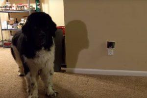 Talkative Dog Convinces His Human to Give Him a Treat 12