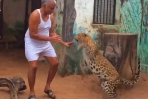 Indian Man Shares His House With Leopards And Bears 11