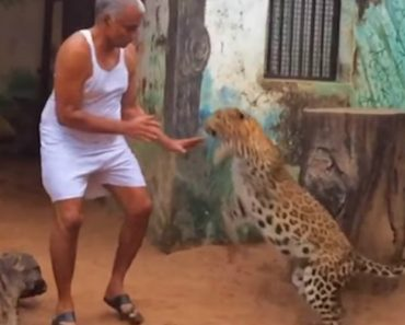 Indian Man Shares His House With Leopards And Bears 9