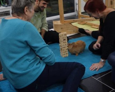 Confident Little Bunny Skillfully Removes a Jenga Block From The Tower Without Toppling It Over 4