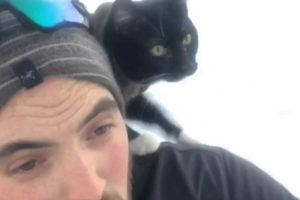 An Adventurous Cat Confidently Rides Downhill Upon His Sled-Riding Human's Shoulder 12