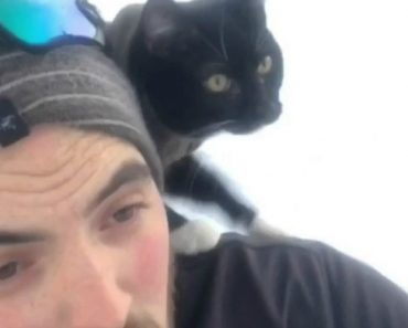 An Adventurous Cat Confidently Rides Downhill Upon His Sled-Riding Human's Shoulder 4