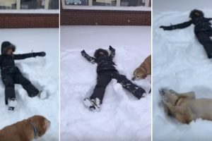 Dog Makes Snow Angels With His Human 10
