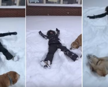 Dog Makes Snow Angels With His Human 1