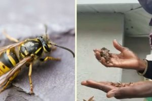 Man Destroys Yellow Jacket Nest With Bare Hands 11