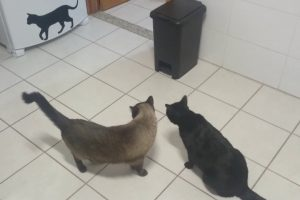 Two Curious Felines Caught On Camera As They Inspect A Cat-Shaped Refrigerator Sticker 9