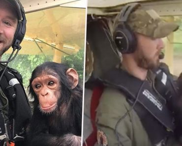 Heartwarming Moment Baby Chimpanzee Bonds With Pilot As He's Flown To Safety After Being Orphaned By Poachers 3
