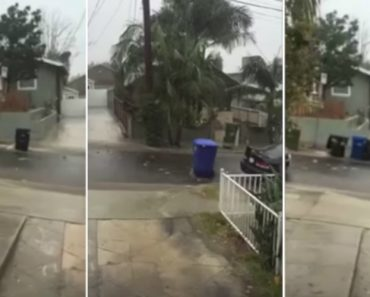 The Best Video You'll Watch Today Stars A Bunch Of Trash Cans 4