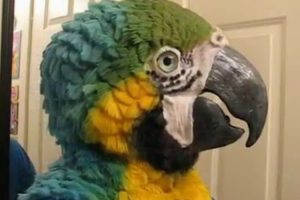 This Woman Makes Incredibly Realistic Animal Head Masks. Here's The Blue & Gold Macaw 9