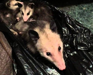 Woman Finds An Opossum In Her Closet, But That's Not Even The Most Surprising Discovery She Makes 2