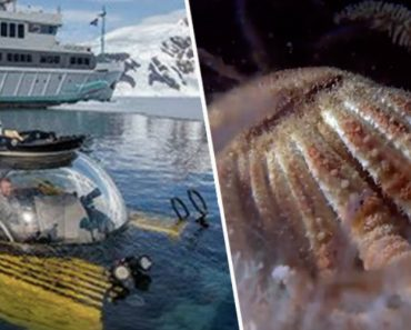 The Deepest Dive In Antarctica Reveals A Sea Floor Teeming With Life 1