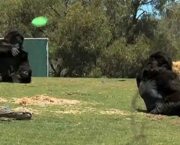 Two Comedians Play Hilarious Prank Dressed Up Like Gorillas At The Zoo 8