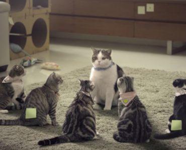 Hilarious Thai Bathroom Design Commercial Employs Gangster Cats 1