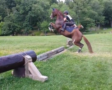 Watch What This Silly Horse Did After He Approached A Teeny-Tiny Obstacle 1