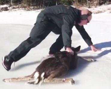 Adorable Baby Deer and Coast Guard Rescuer Scramble to Get Off Ice 6