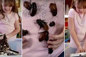 9-Year-Old Obsessed With Collecting Cockroaches Is The Most Terrifying Nightmare 11